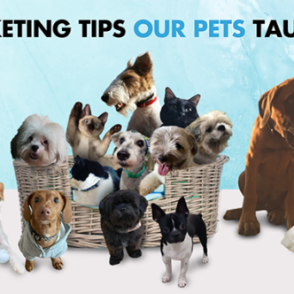 """Banner photo of dogs and cats under headline """"5 Marketing Tips Our Pets Taught Us"""""""